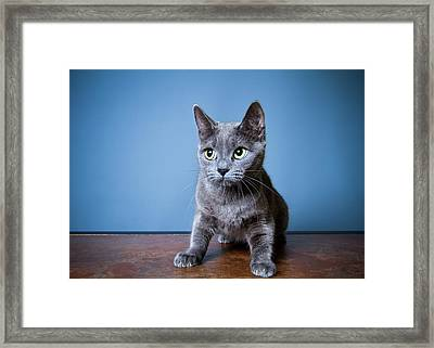 Apprehension Framed Print by Square Dog Photography