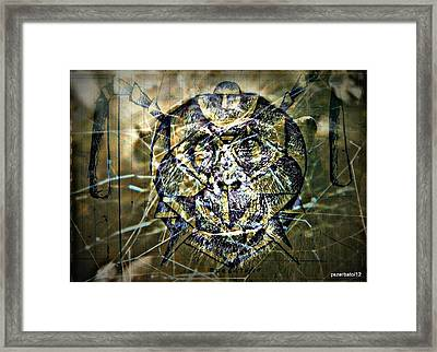 Arachnids Framed Print by Paulo Zerbato