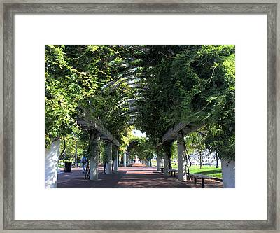Arbor In Boston Framed Print by Kristin Elmquist