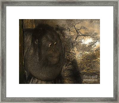 Arboreal Dreams Framed Print by Arne Hansen