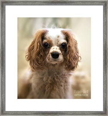 Archie Portrait Framed Print by Jane Rix