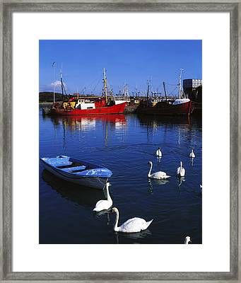 Ardglass, Co Down, Ireland Swans Near Framed Print by The Irish Image Collection