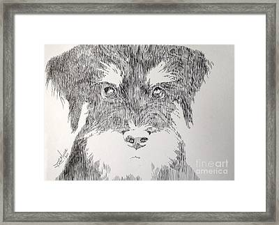 Are You Kidding Framed Print by Robbi  Musser