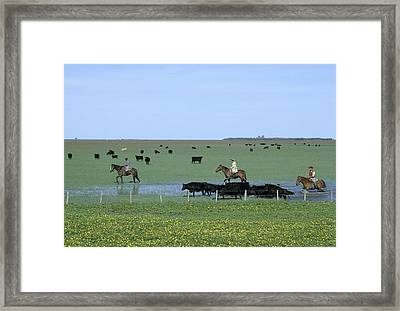 Argentine Gauchos, Or Cowboys, Herd Framed Print by James P. Blair