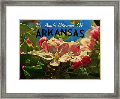 Arkansas Apple Blossoms Framed Print by Flo Karp