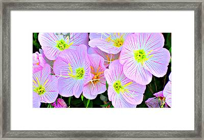 Arkansas Wildflowers Framed Print by Marty Koch