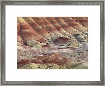 Art And Color In Nature Framed Print by Leland D Howard