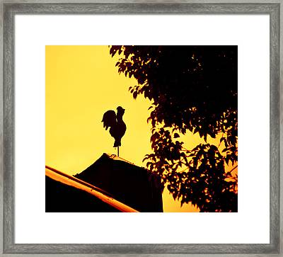 As A Rooster Crows Framed Print by Carolyn Marshall