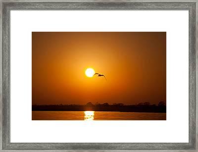 As The Gull Glides Framed Print by Karol Livote