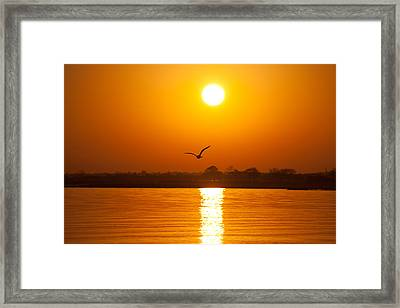 As The Seagull Heads Home Framed Print by Karol Livote