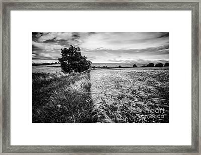 As The Wind Blows Framed Print by John Farnan