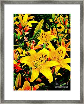 Asiatics In May  Framed Print by Chris Berry