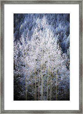 Aspen Lace Framed Print by Beth Riser