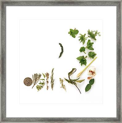 Assortment Of Herbs Framed Print by David Munns