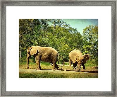 At Cross Purposes Framed Print by Lianne Schneider