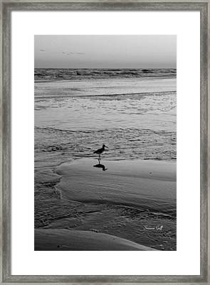 At Twilight In Black And White Framed Print by Suzanne Gaff