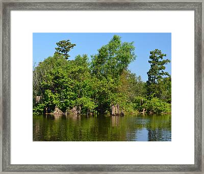 Atchafalaya Basin 46 Framed Print by Maggy Marsh