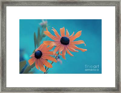 Attachement - S02cz Framed Print by Variance Collections
