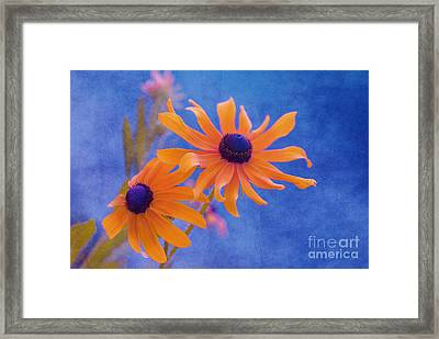 Attachement - S11at01d Framed Print by Variance Collections