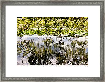 August Reflections Framed Print by Rachel Cohen
