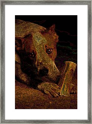 Australian Cattle Dog Framed Print by One Rude Dawg Orcutt
