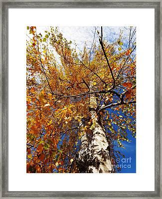 Autumn Again Framed Print by AmaS Art