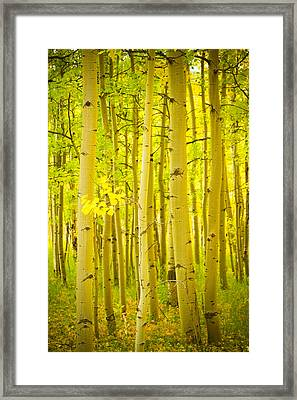 Autumn Aspens Vertical Image  Framed Print by James BO  Insogna