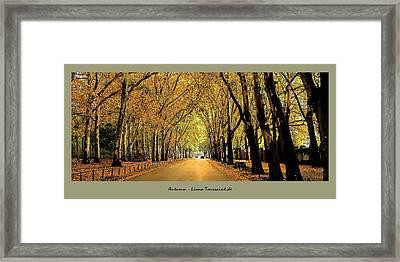 Autumn Avenue Framed Print by Liona Toussaint