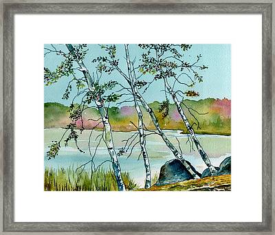 Autumn Birches Framed Print by Brenda Owen