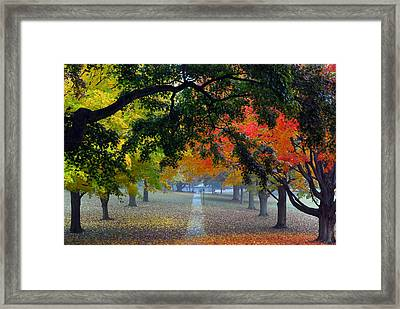 Autumn Canopy Framed Print by Lisa Phillips