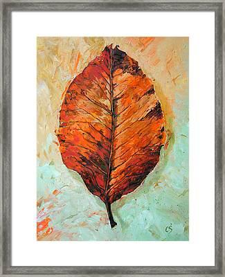 Autumn Colors Framed Print by Chris Steinken