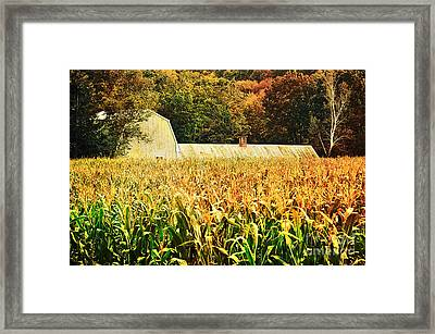 autumn cornfield in Granville MA Framed Print by HD Connelly