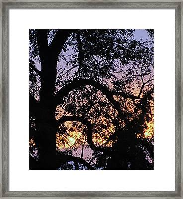 Autumn Dusk Framed Print by Todd Sherlock