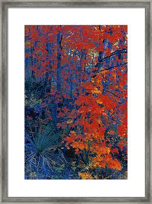 Autumn Foliage Framed Print by Don Hammond