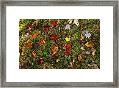 Autumn Forest Floor Framed Print by Matt Tilghman