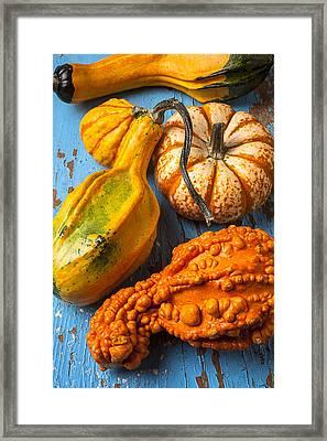 Autumn Gourds Still Life Framed Print by Garry Gay