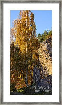 Autumn Grace Framed Print by Lutz Baar