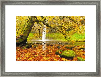 Autumn Leaves At South Silver Falls Framed Print by Alvin Kroon