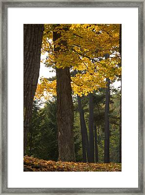 Autumn Leaves Framed Print by Darleen Stry