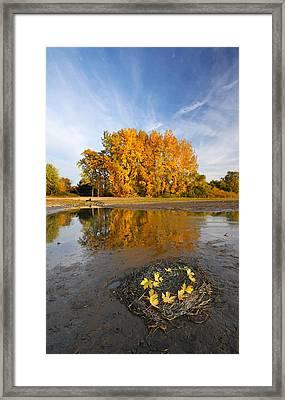 Autumn Nest Framed Print by Mircea Costina Photography