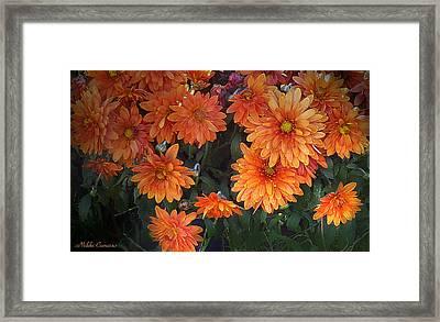 Autumn Orange Flowers Framed Print by Mikki Cucuzzo