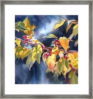 Autumn Plums Framed Print by Sharon Freeman