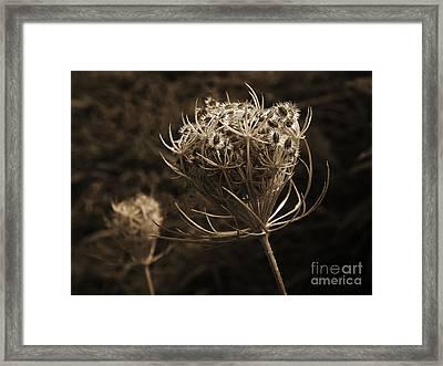 Autumn Pod Framed Print by Jim Wright