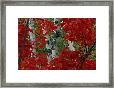 Autumn Red Maple Leave Frame Framed Print by Medford Taylor