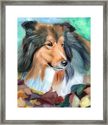 Autumn - Shetland Sheepdog Framed Print by Lyn Cook