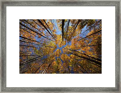 Autumn Sky Framed Print by Mircea Costina Photography