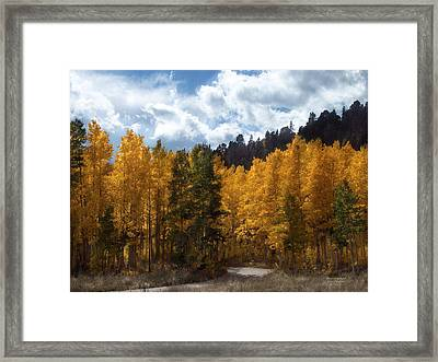 Autumn Splendor Framed Print by Carol Cavalaris