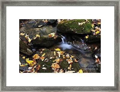 Autumn Stream Monongahela National Forest Framed Print by Thomas R Fletcher