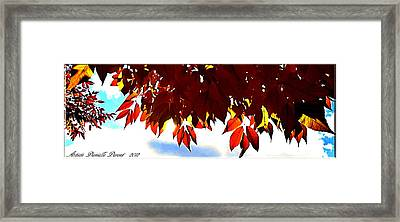 Autumn Sun Glory Framed Print by Danielle  Parent