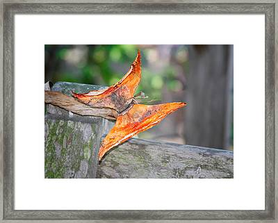 Autumn - The Year's Loveliest Smile Framed Print by Christine Till